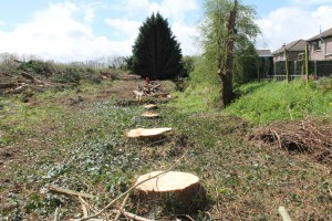 how to become a tree surgeon in ireland