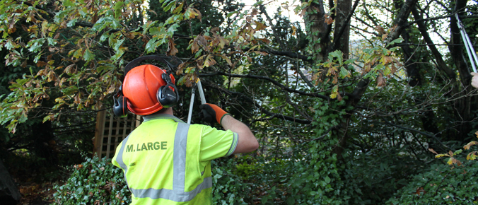M.Large-pruning-work-slider