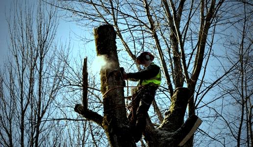 climbingArborist_300_Fotor