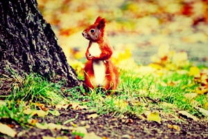 wildlife_squirrel_300_Fotor