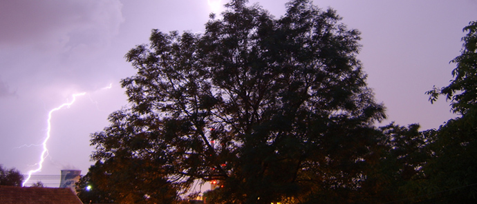 tree in storm on m.large.com