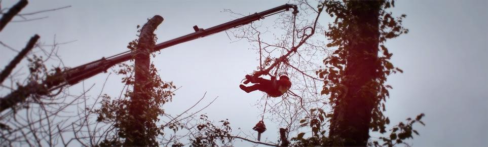 tree surgery with crane at  MLarge